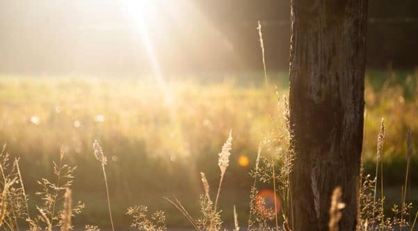 How You Can Harness the Healing Power of Sunlight